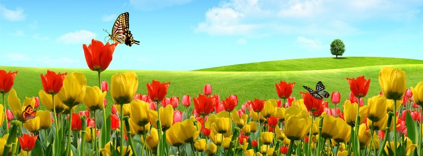 Tulips timeline cover - Facebook timeline covers maker