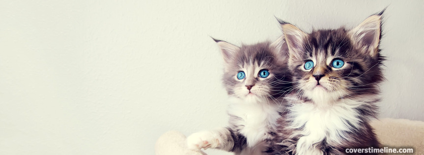 Fluffy Kittens Timeline cover - Facebook timeline covers maker